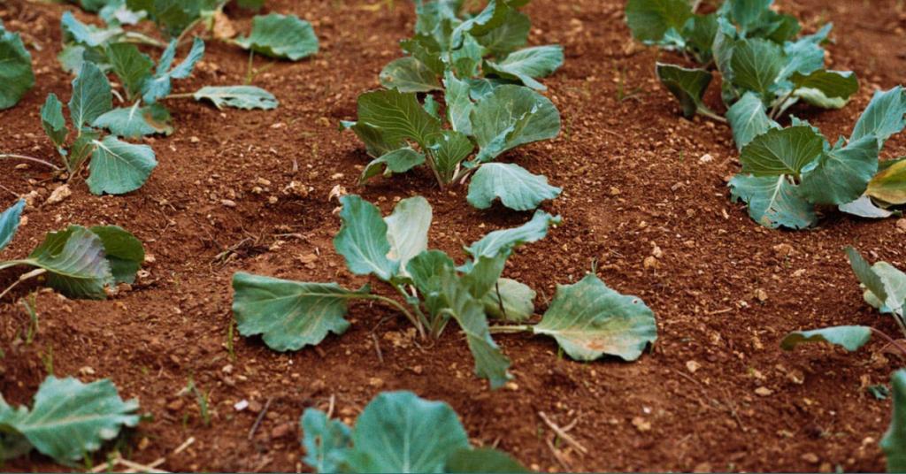 Proxima / permaculture